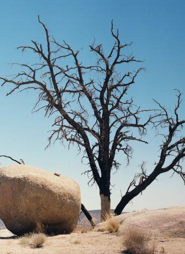 zghertner_doshi_s.tree2014_-_zoe_ghertner